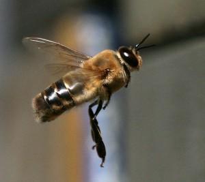 Off Topic: Drohne im Flug