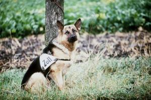 Hund, unterdrückt und ausgebeutet in Ost oder West? Bildquelle